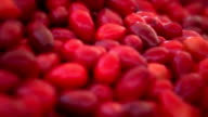 Cranberry video