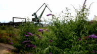 Crane on waste land port to lift heavy loads. Tracking shot right to left. Shrubbery with flowers in the front. Long shot. video