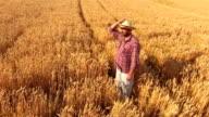 Crane Shot: Farmer Standing In The Wheat Field Looking Away video