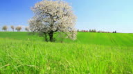 Crane shot of a green field in HD video