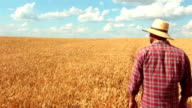 Crane Shot Of Farmer Standing In The Wheat Field video