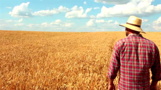 Crane Shot Of Farmer Standing In The Wheat Field video