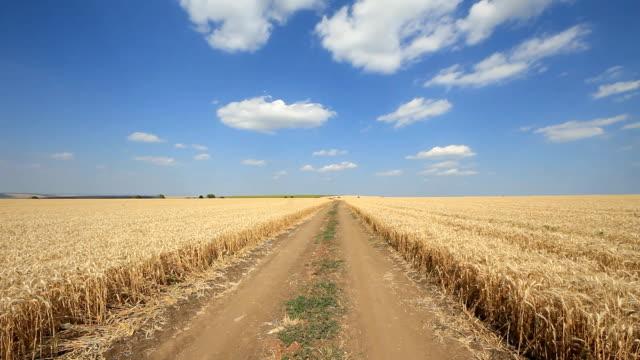HD crane:Field of wheat video