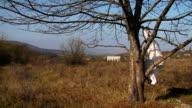 Crazy Woman In Long White Nightie Swinging On Tree Branch video