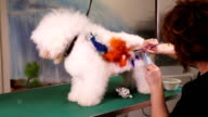 Creative art at pet salon video