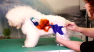 Creative art with a dog at pet salon video