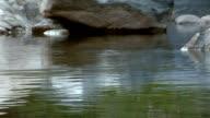 Creek Background Fish Jump Slo video