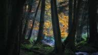 Creek In Autumn Forest Tilt Up video