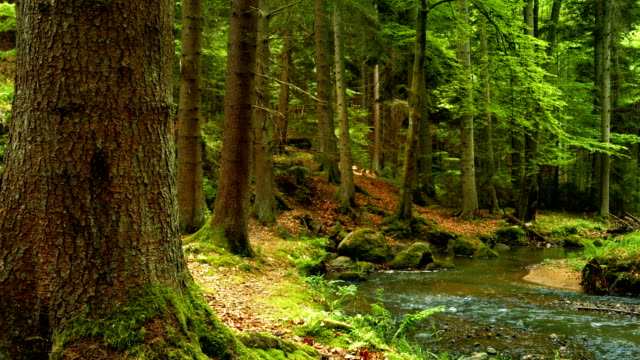 Creek In Green Forest PAN (4K/UHD to HD) video