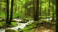Creek In Spring Forest Dolly Shot (4:2:2@100 Mb/s) video