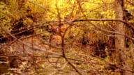 Creek in the fall video