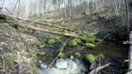 creek ripple of forest with fallen branches and moss stones. video