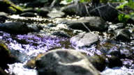 creek water sunshine tracking video