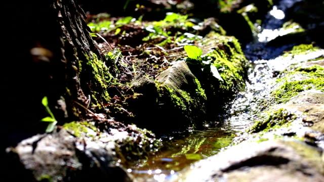 Creek Water video