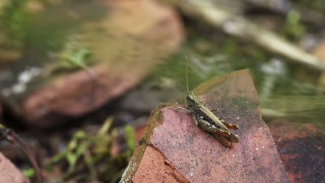 SLOW MOTION: Cricket video