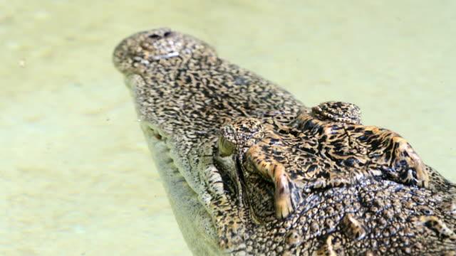 Croc video