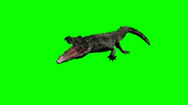 crocodile attak - green screen video