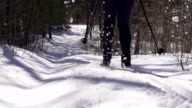 Cross-country Skier in forest video