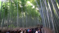 crowded people at bamboo forest in Arashiyama video
