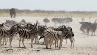 Crowded waterhole with zebras and osrtich video