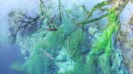 crystal clear water with fish and algae video