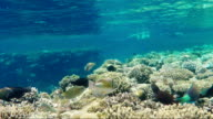 Crystal clear water with tropical fish and corals. Bathing tourists can be seen in the distance - a great vacation video