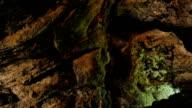 Cueva de los Verdes (Lanzarote)- close up on the beauty of the cave video