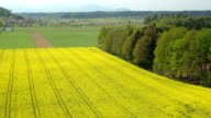 AERIAL: Cultivation of lush yellow oilseed rape field in countryside farmland video