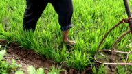 Cultivation of the land in order to raise crops video