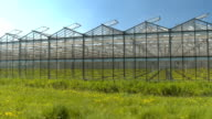 CLOSE UP: Cultivation of young green vegetable seedlings in modern glasshouses video