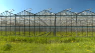 CLOSE UP: Cultivation of young green vegetables and flowers in glasshouses video