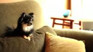 Curiosity Killed the Dog video