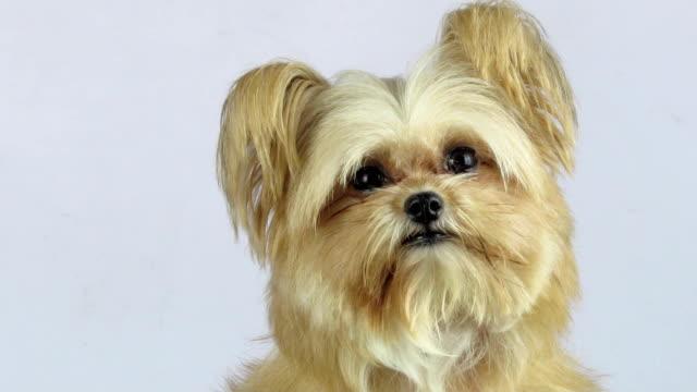 Curious Dog Closeup video
