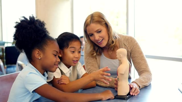 Curious elementary schoolgirls learn about the human body in biology class video