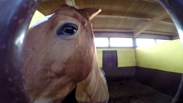 Curious Horse playing with camera video