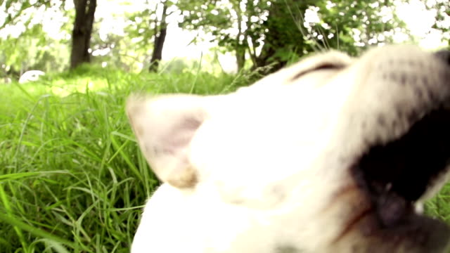 Curious puppy jumping out of grass in slow motion video