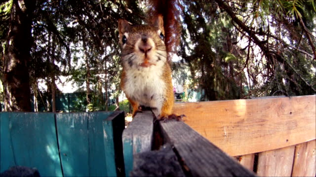curious squirrel video