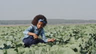 Curly African Farmer Inspecting Cabbages video
