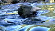 Current in Mountain Stream forms small Rapids video
