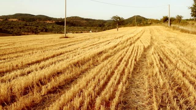 Cut crop and hot summer sunset video