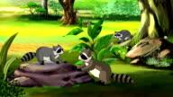 Cute American Raccoon video