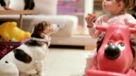 cute baby girl eating cupcake in front of her jack russell dog video