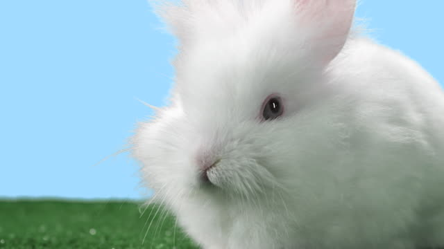 Cute bunny looks around. video