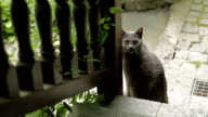 Cute cat at bottom of stairs video