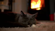 Cute Cat falling asleep in front of fire Close up video