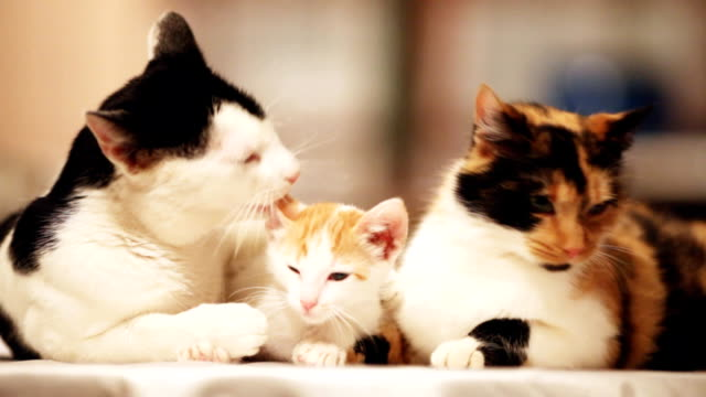 Cute cats family resting. video