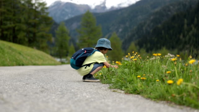 Cute child, boy, walking on a little path in Swiss Alps, hiking mountain with backpacks, gathering herbs and flowers video
