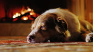 Cute dog dozing in a cozy house near the fireplace video