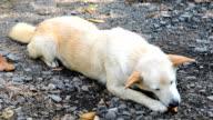 Cute dog eating bone video