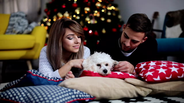 Cute dog enjoy time with his festive owners video
